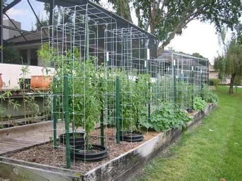 best 25 tomato cages ideas on pinterest tomato cage