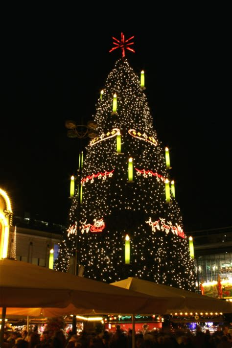 tallest xmas teee in tge workf worlds tallest trees for 2014