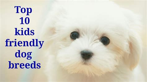 7 Kid Friendly Pets by Top 10 Friendly Breeds