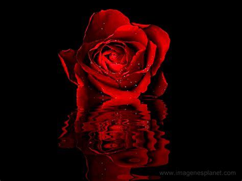 imagenes con movimiento de rosas rojas rosas rojas animadas con movimiento y frases cortas de