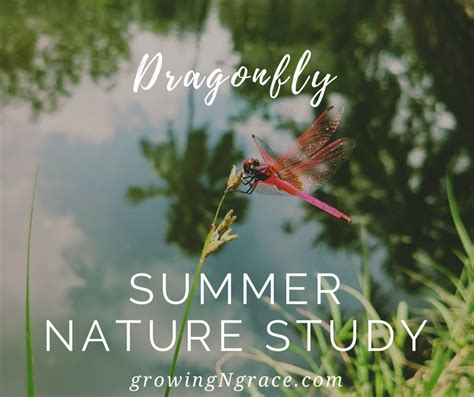 dragonfly summer nature study growing in grace