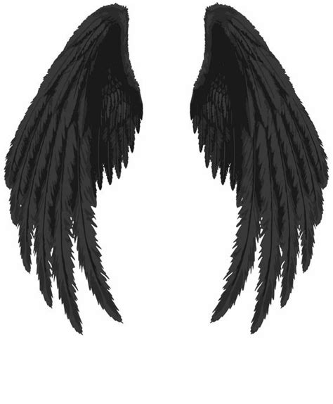 raven wing tattoo wings wings wings drawing wings