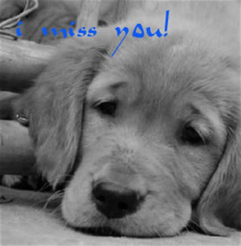 i miss you puppy miss you pictures images commentsdb page 48