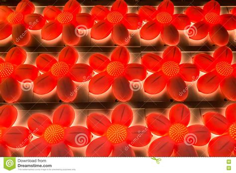 colorful flowers picture orange flowers in bloom light and orange colored flower lights stock photo image