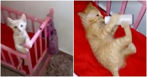 Bottle In Crib by Tiny Runs To Crib And Waits When She Sees