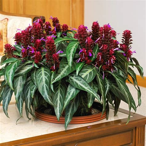 flowering house plants flowering house plants coloured decoration ideas with