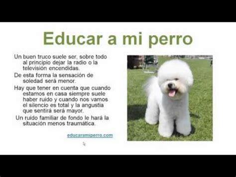 como un perro c 243 mo educar a un perro a hacer sus necesidades youtube