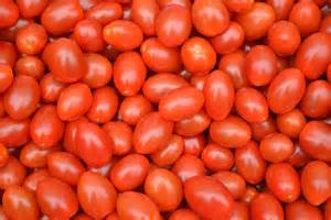 baby plum tomatoes free stock photo domain pictures