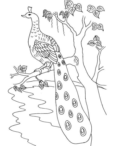 realistic tree coloring page peacock perching on a tree branch realistic coloring page