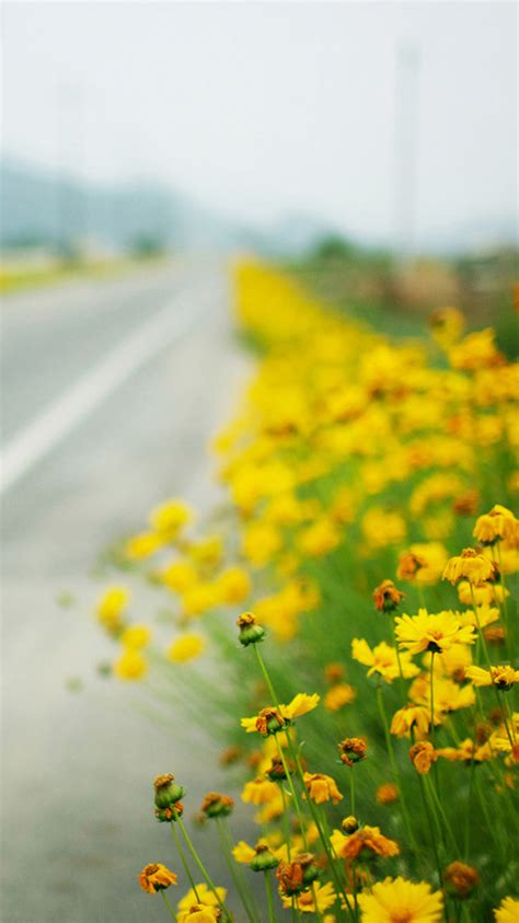yellow flowers iphone wallpapers full hd yodobi