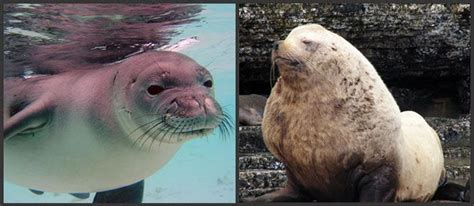 What Is The Difference Between Sealing And Expunging A Criminal Record What S The Difference Between A Seal And A Sea