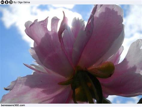assunzione fiori di bach fiori di bach funzionano usi posologia benefici e