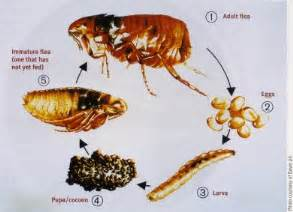 Homemade Garden Pest Control - get rid of fleas