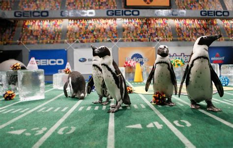 who won the puppy bowl 10th annual puppy bowl is a win win on and the field