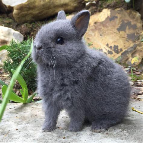coniglietti nani alimentazione nani colorati la stalla dei conigli allevamento e