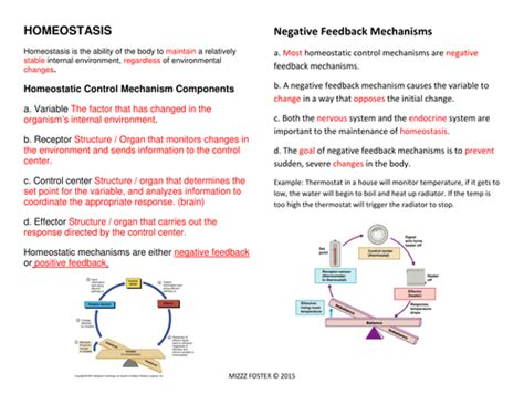 Feedback Mechanisms Worksheet Answers by Homeostasis Worksheets And Answer Key By Mizzzfoster