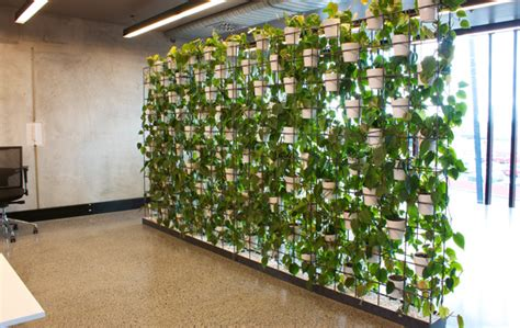 interior plant wall the urban garden auckland s indoor plant hire specialists