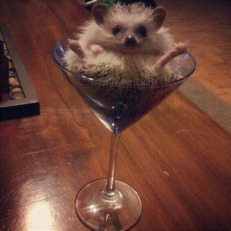 5 Alternative Ways To Use A Martini Glass   Smedson