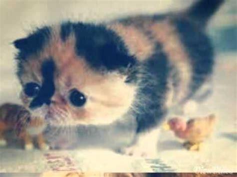 imagenes kawai de gatitos gatitos kawaii youtube