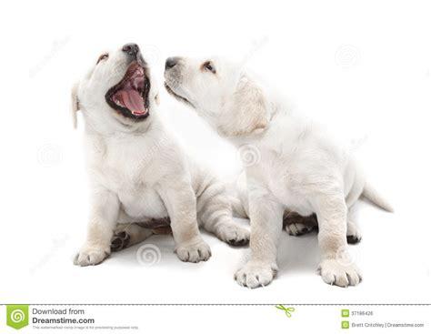 recipe for good smelling dog shoo white dog sour recipe dishmaps