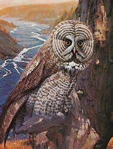 great grey owl richard r miller