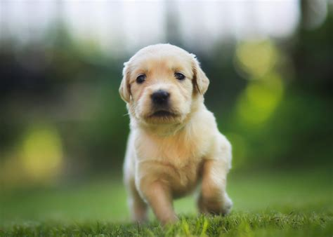 do puppies how much do puppies cost breeds picture