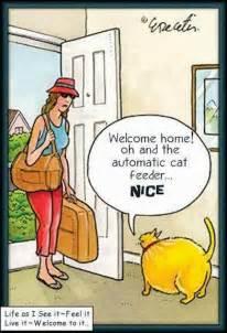 home funniest world s funniest cat joke pictures