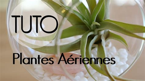 diy plantes aeriennes decoration de tillandsia
