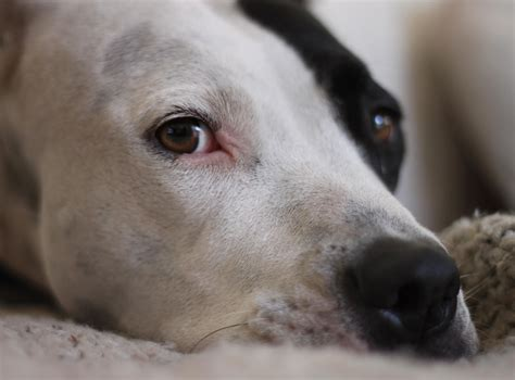 lost dogs illinois aspca s position statement on shelter responsibilities regarding lost pets lost