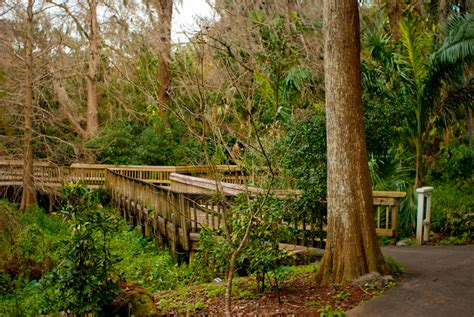 Orlando Florida Botanical Gardens Harry P Leu Gardens Florida Hikes