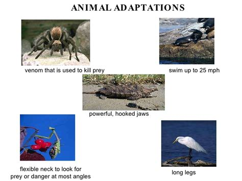 4th grade 187 animal adaptations worksheets 4th grade