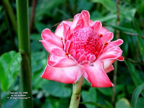 names of plants in the tropical rainforest rainforest flowers tropical rainforest plants names