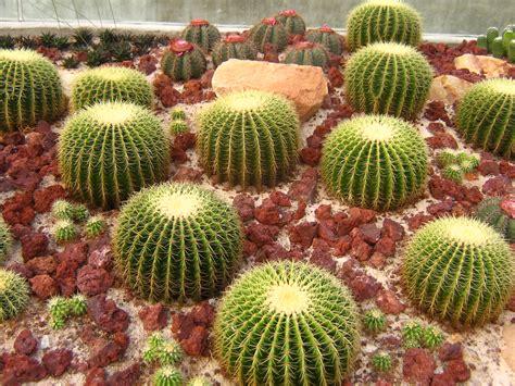 file singapore botanic gardens cactus garden 1 jpg wikipedia