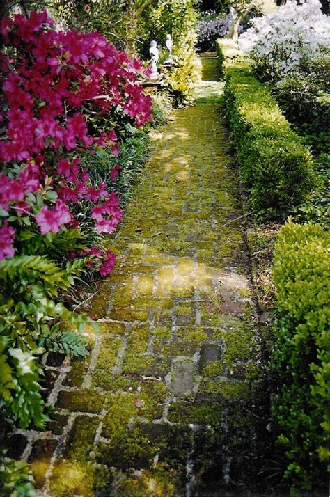 Charleston Botanical Gardens Charleston Botanical Gardens O Jpg Magnolia Plantation Gardens Botanical Garden In Charleston
