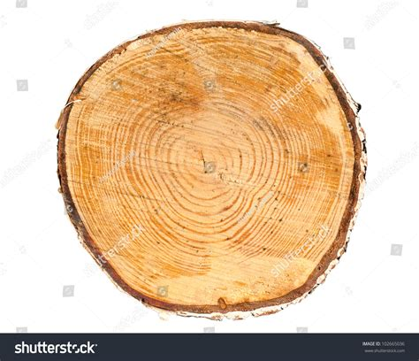 cross section of a tree trunk cross section tree trunk isolated on stock photo 102665036