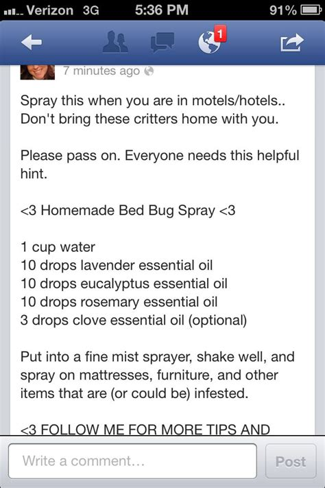 homemade bed bug killer homemade bed bug spray how to pinterest