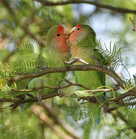 25 beautiful love birds pictures incredible snaps