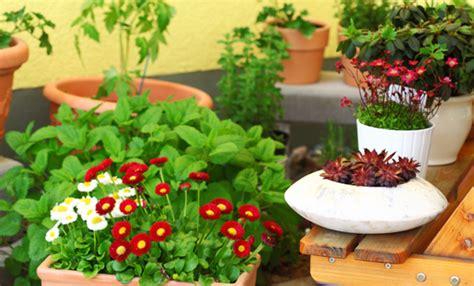vasche per piante da terrazzo fiori da balcone in ombra 8 fiori che vivono bene con