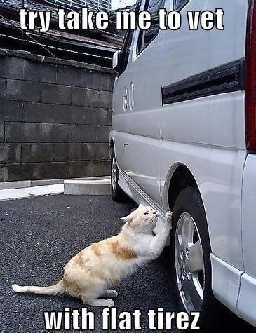 Pet Insurance Meme - 17 best images about pet memes on pinterest cats dump a