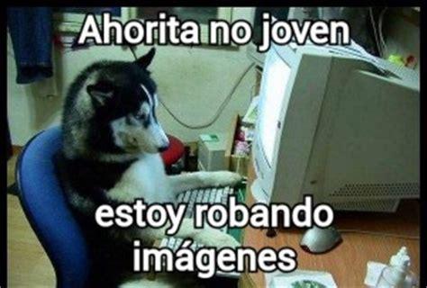 imagenes de palabras malandritas meme gracioso de perro usando la computadora imagenes