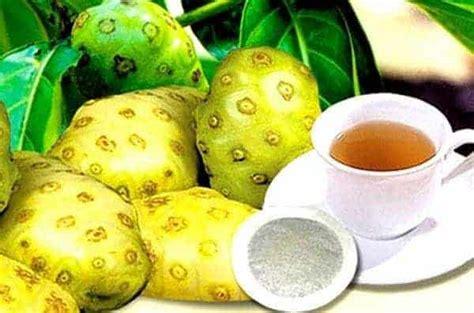 Penjual Bibit Seledri tanaman obat dan khasiatnya bibit