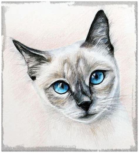imagenes a lapiz de gatos ver imagenes de gatos dibujados a l 225 piz archivos dibujos