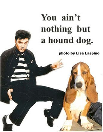 you ain t nothin but a hound you ain t nothing but a hound mo 239 cani l od 233 onie