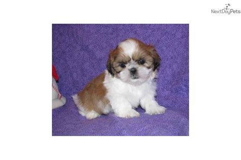 big cedar puppies puppies for sale from big cedar puppies member since january 2011