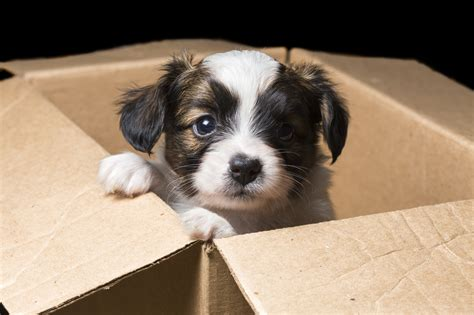 moving a dog to a new house moving understanding your dog s stress when moving into a new house part 2 my