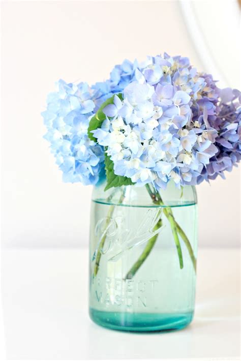 Hydrangea In Vase by Tip To Keeping Cut Hydrangeas Looking Fresh Of Family Home