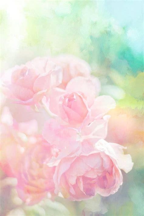 in pastels pink roses photo pastel flower digital nursery