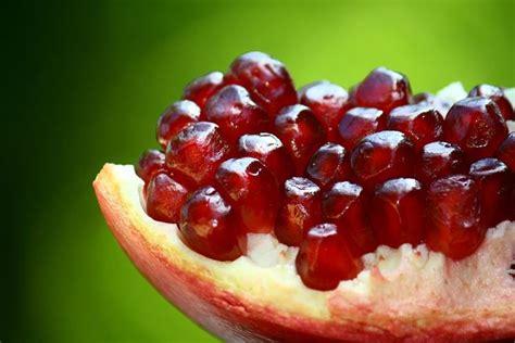 melograno coltivazione in vaso melograno piante da frutto coltivazione melagrana
