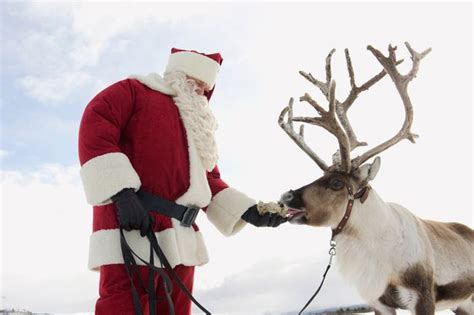 days out where can you see reindeer in the uk for