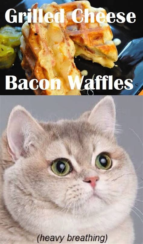 Cat Heavy Breathing Meme - grilled cheese bacon waffles cats funny meme humor